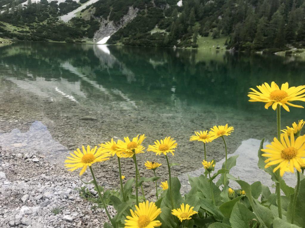 Im Sommer strahlen die Blumen am Seebensee mit dem Wasser um die Wette
